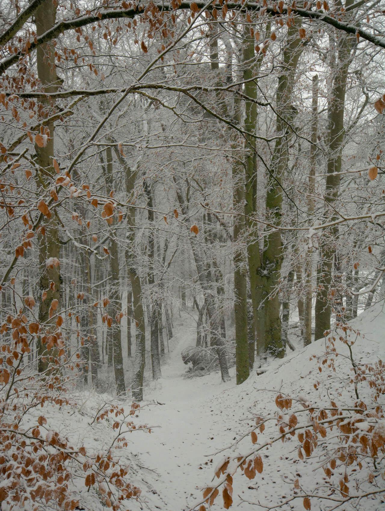 Blick den Wald hinunter von der Freundschaftshöhe.